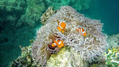 foto bawah laut pulau menjangan keren