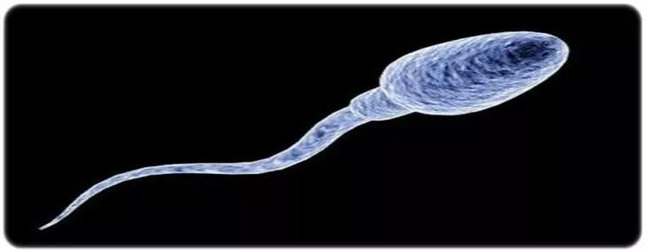Kamikaze Sperm Nedir ?