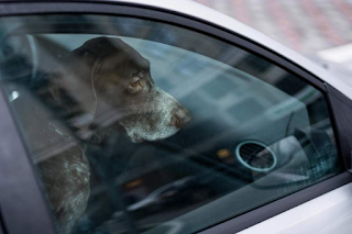 Πέθανε σκύλος από τον καύσωνα κλεισμένος μέσα σε ΙΧ κοντά στον Αλμυρό