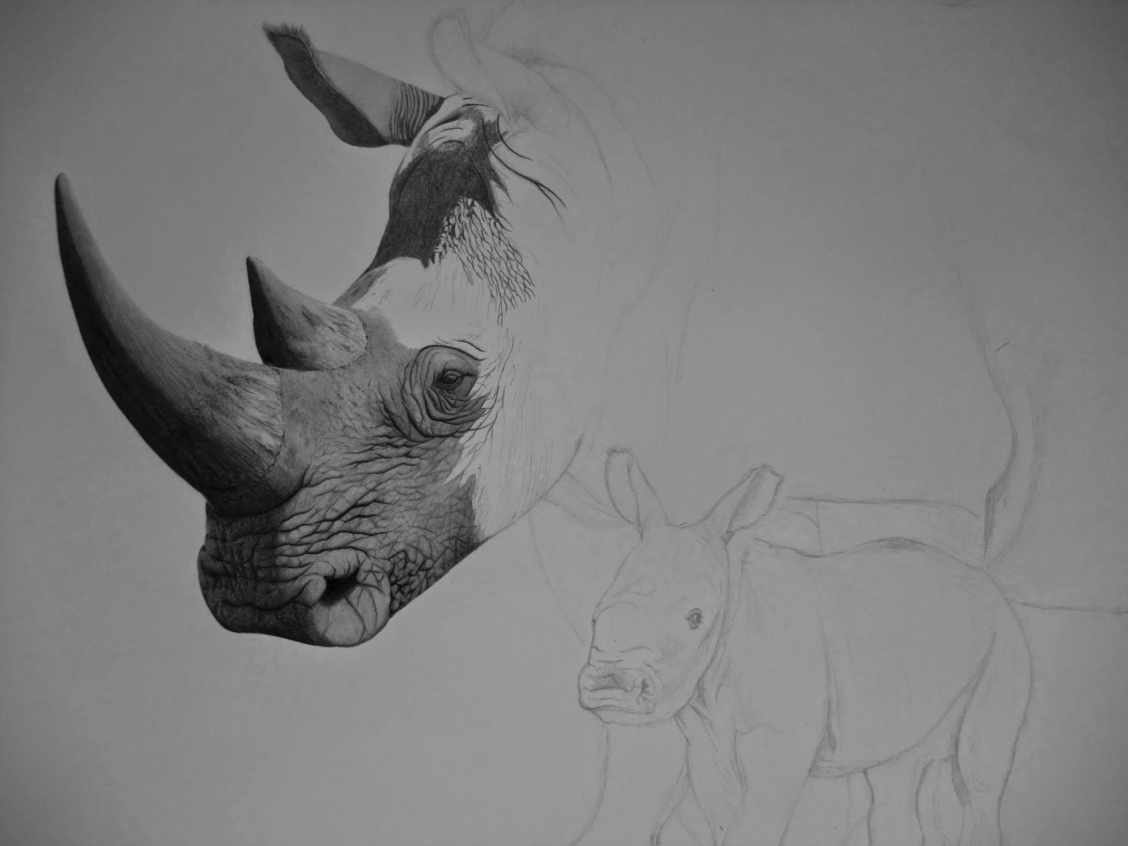 antoine roquain dessin animalier wildlife pencil art rhinoc ros blancs. Black Bedroom Furniture Sets. Home Design Ideas