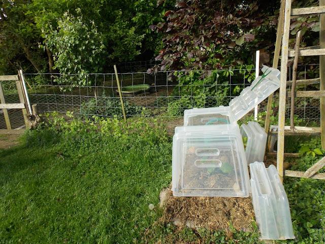 nouveaux aménagements dans mon jardin en permaculture.