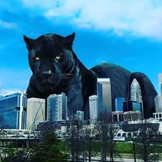 Mike Klonsky S Blog Kids Now Asking About The Real Black Panthers