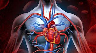 Damar Tıkanıklığı Belirtileri Nelerdir? ile ilgili aramalar elde damar tıkanıklığı belirtileri  bacak damar tıkanıklığı belirtileri forum  kol damar tıkanıklığı belirtileri  bacak damar tıkanıklığı egzersizleri  kalp damar tıkanıklığı belirtileri uzman tv  damar tıkanıklığı hangi testle anlaşılır  beyin damar tıkanıklığı belirtileri  kalp damar tıkanıklığı nasıl açılır