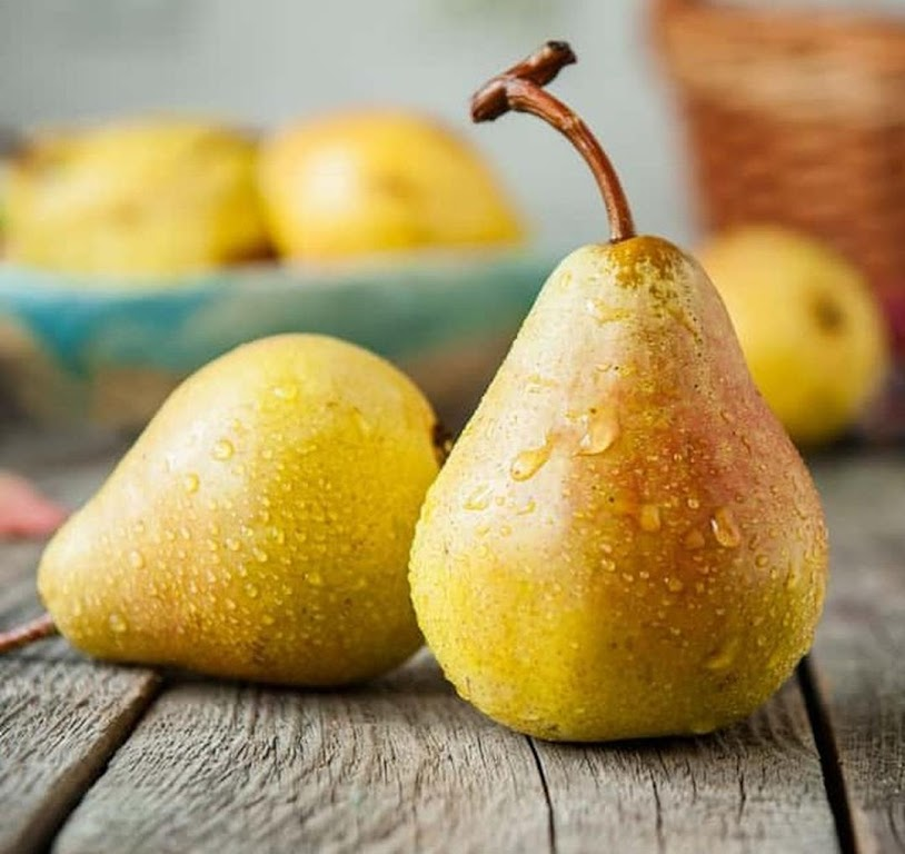 Bibit Benih Biji Buah Pir Common Pear Import Grow Your Own Fruit Isi 20 Biji Jawa Barat