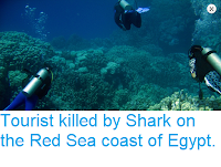 https://sciencythoughts.blogspot.com/2018/08/tourist-killed-by-shark-on-red-sea.html