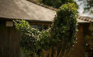 Topiary animal