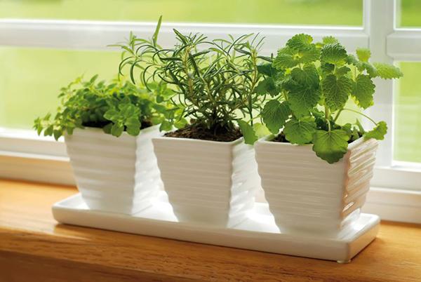 temperos-e-ervas-cozinha-abrirjanela