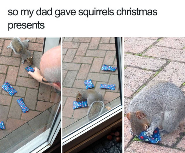 So my dad gave squirrels Christmas presents