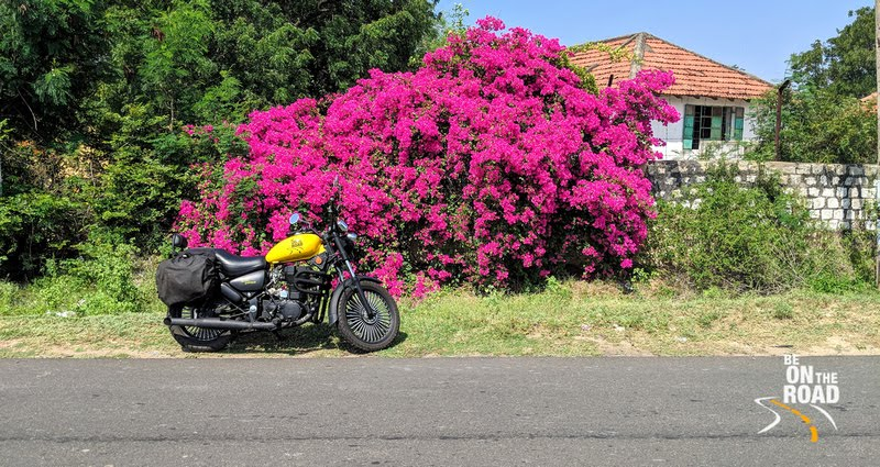 My Custom Motorcycle and a Bright Bouganvilla bush