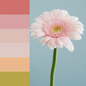cara membuat color pallete di photoshop