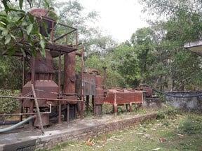 makhana-plant-jhanjharpur