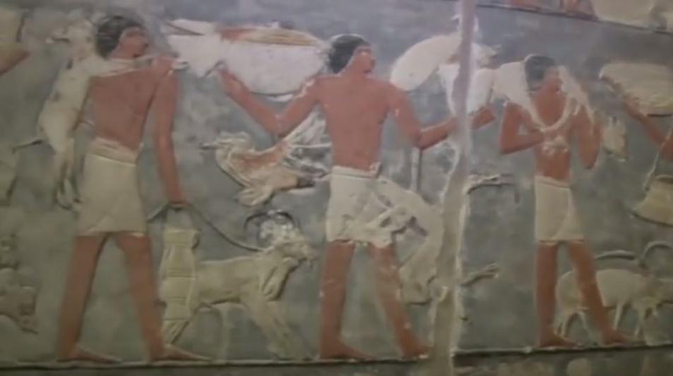 εφαρμογή γνωριμιών στην Αίγυπτο