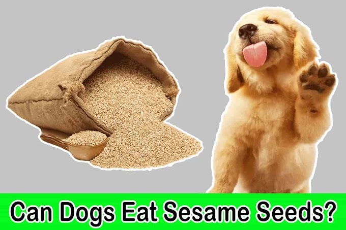 [2021] Can Dogs Eat Sesame Seeds | Are Sesame Seeds Bad for Dogs