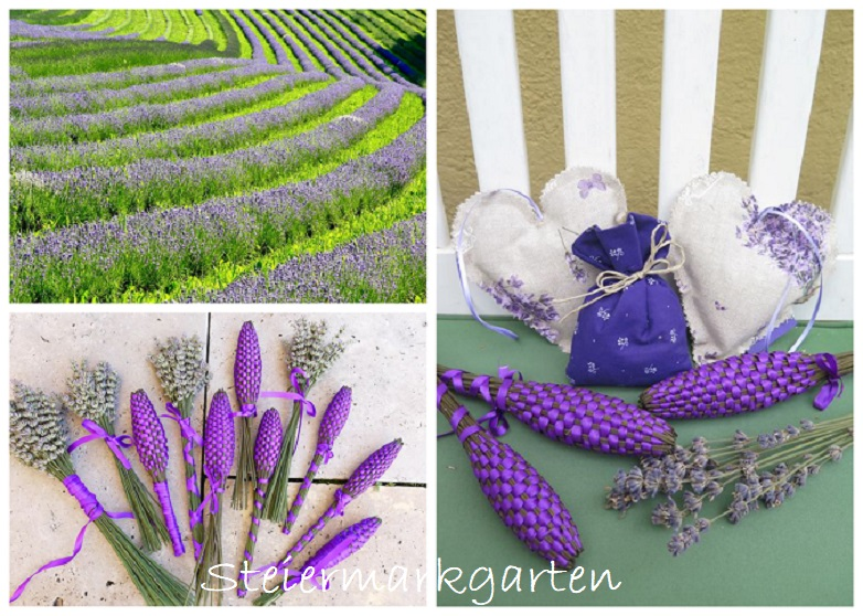 Lavendel-Collage-Steiermarkgarten