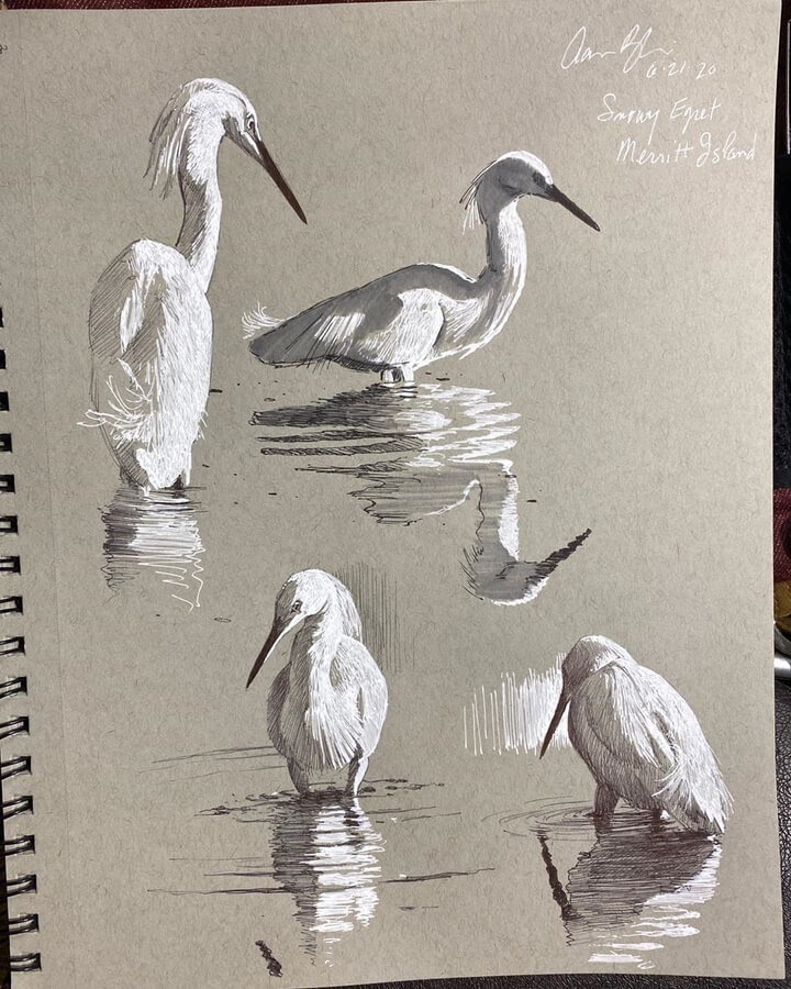 11-Snowy-Egrets-drawing-study-Aaron-Blaise-www-designstack-co
