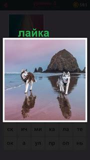 655 слов по берегу бегут две собаки породы лайка 5 уровень
