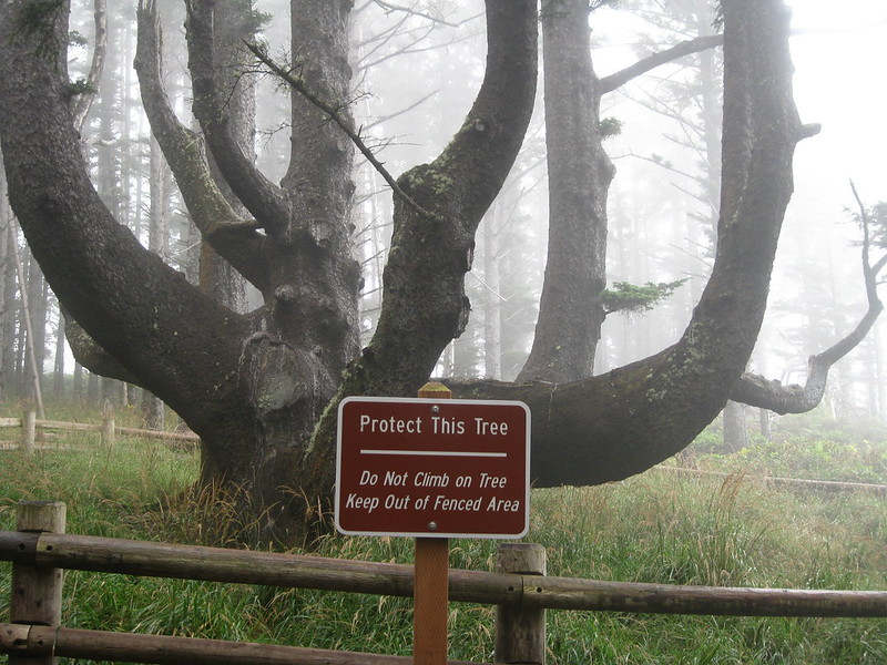 oregon tree octopus