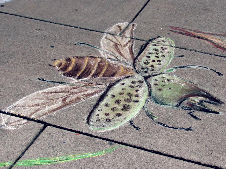 bugfest-2013-chalk-art-raleigh-nc