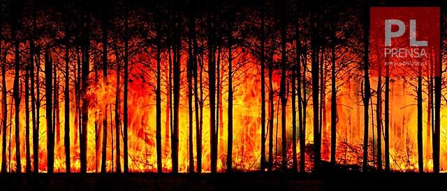 ¿Incendios que ya no podemos apagar?▶️ARDD Podcast 979