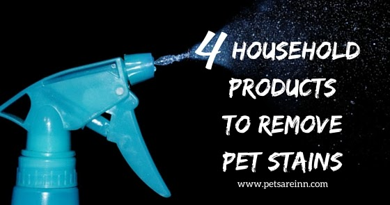 4 Household Items To Clean Pet Stains