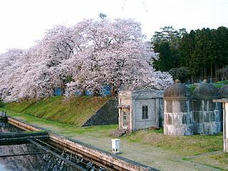 滝沢浄水場の桜 / 会津若松市