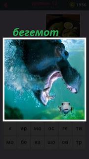 655 слов под водой бегемот с открытой пастью ловит рыбу 12 уровень