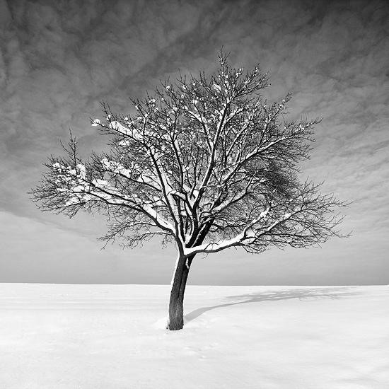 Maciej Leszczynski Photography Tree