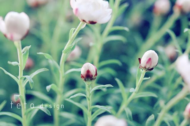 春の花かんざし  teto design ・テトデザイン