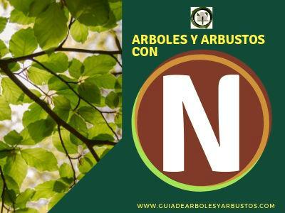 Lista de arboles y arbustos que empiezan con la letra N