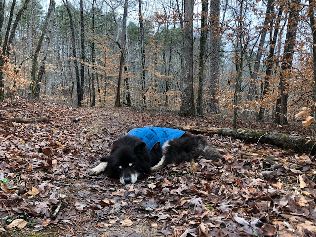 dog sleeping on a forest trail