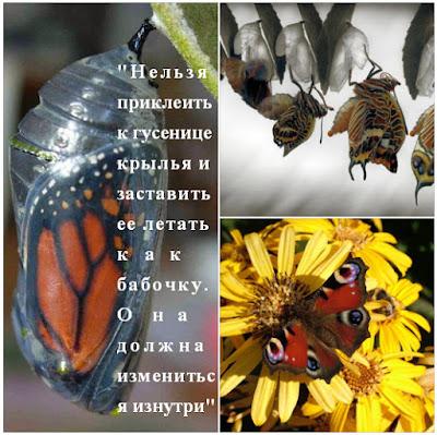 из гусеницы в бабочку