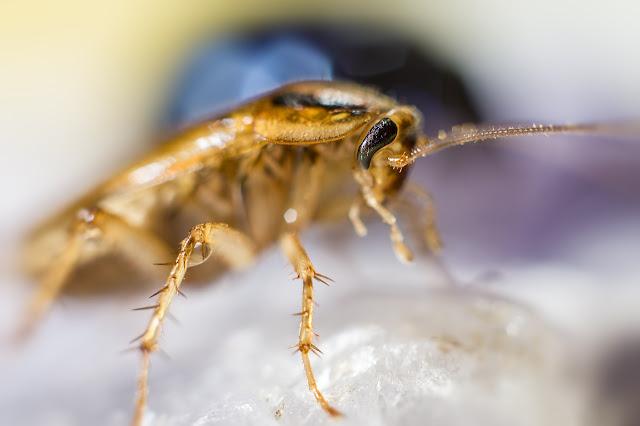 Petua orang kampung untuk hindari masalah lipas dan nyamuk di dapur rumah anda