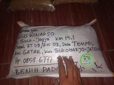 Benih Padi TRISAKTI Pesanan  AGUS WINARSO  Sukoharjo, Jateng  (Sesudah di Packing)