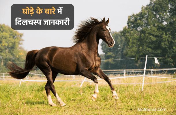 essay-horse-information-hindi