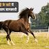 घोड़े के बारे में 40 दिलचस्प जानकारी - Information About Horse in Hindi