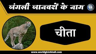 Cheetah animal name in hindi