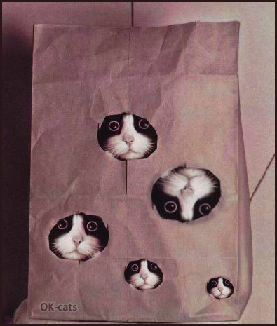 Photoshopped Cat picture • Funny cat family living in a paper bag, a safe and secure place. Cats are so amazing