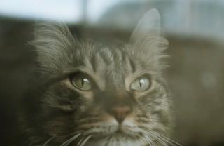 fakta kucing meramal badai cuaca