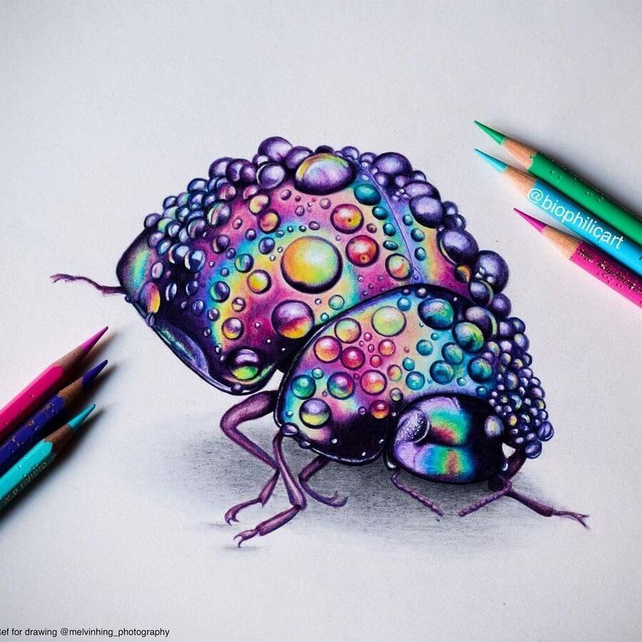 03-Rain-drops-Rainbow-beetle-Sallyann-www-designstack-co