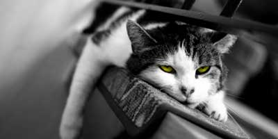 Image result for bored pets