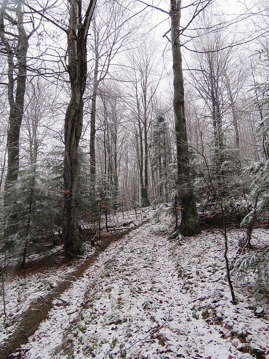 Przychodzi do nas leśna droga.