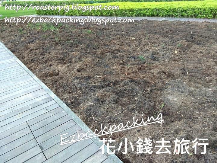 2021年香港花卉展覽:中環鬱金香花田