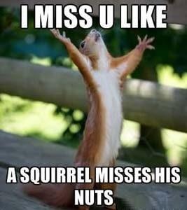 i miss you meme  28