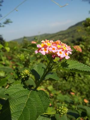 Bunga Hutan Memori Masa Kecil di Papua