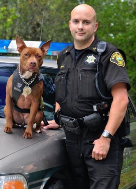Programa ayuda a pitbulls huérfanos como perros policía