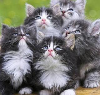 Macam-Macam Kucing
