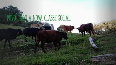 A foto mostra o gado pastando no pasto é um rebanho de gado e não de seres humanos. Gado a nova classe social-do Brasil.