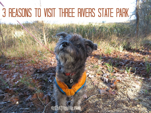oz 3 reasons visit three rivers florida  state park