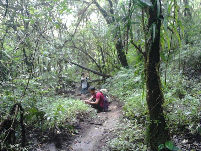 Pendakian Gunung Pundak