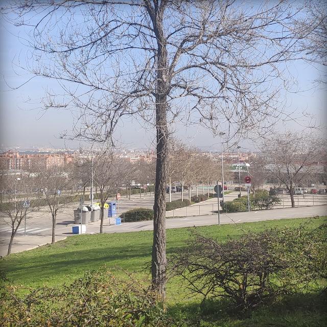 Foto árbol sin hojas Madirex